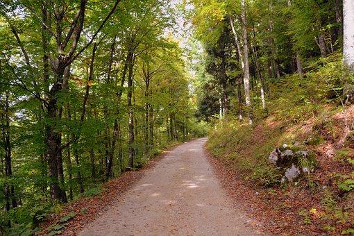 Trail, Forest, Autumn, The European Path, E5, Lessinia