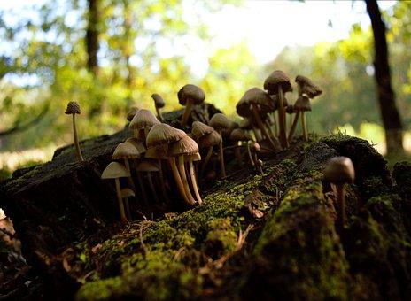 Autumn, Mushrooms, Stump, Forest, Litter, Nature, Trunk