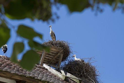 Stork, Salem, Monkey Mountain, Germany, Storchennest