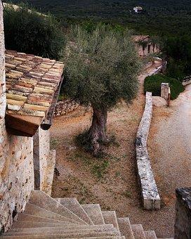 Greece, Wine, Olives, Olive Tree, Late Summer