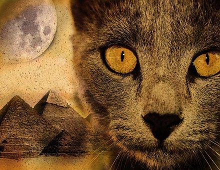 Cat, Pyramid, Moon, Desert, Sand, Imagination