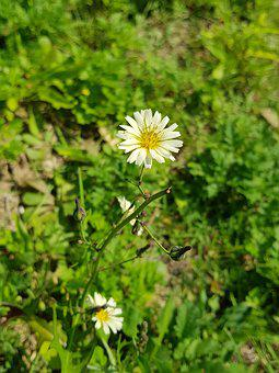 White Flowers, Greenness, Pretty, Spring, October