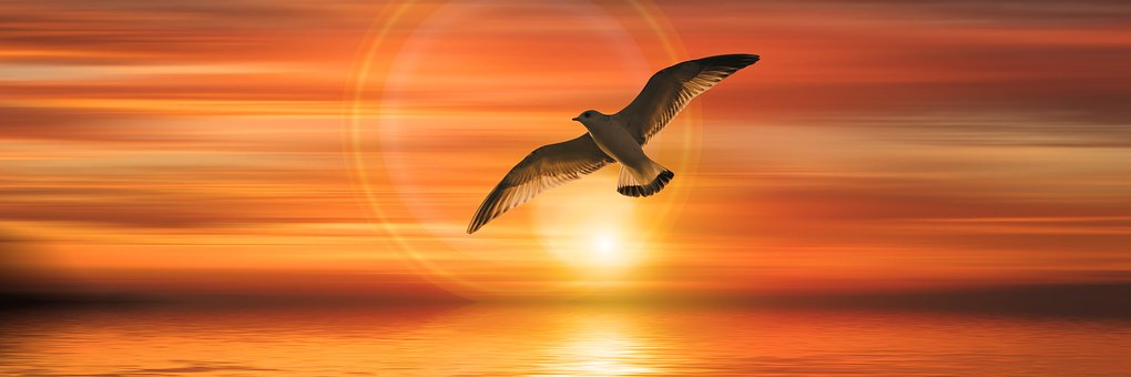 Banner, Header, Gull, Bird, Fly, Sunset, Sun, Sea