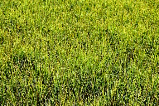 Swamp Grass, Wetland, Marshland, Green, Background