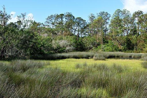 Florida Marshland, Swamp, Grass, Nature, Wetland