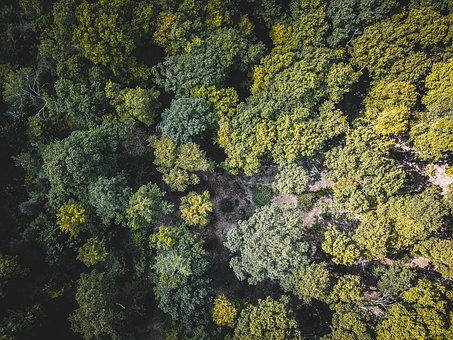 Forest, From, Above