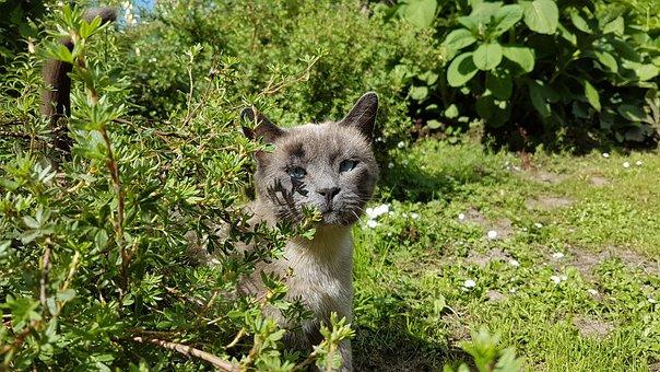 Pet, Cat, Animal, Kitten, Kitty, Adorable, Looking