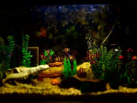 Aquarium, Fish, Ornamental, Fishing, Fisherman