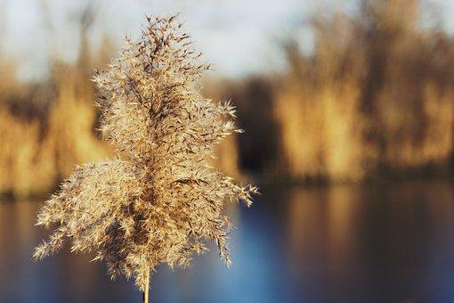 Autumn, Background, Beautiful, Blue, Bog, Bright, Brown