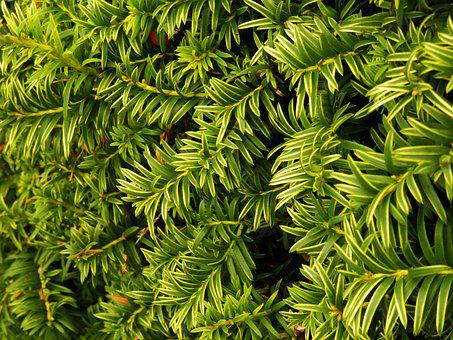 Leaves, Hedge, Bush, Nature, Green, Plant, Leaf, Garden
