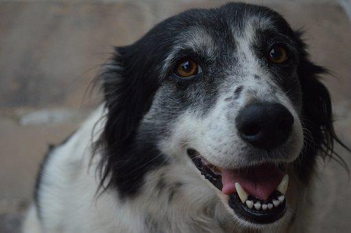 Dog, Animal, Best Friend
