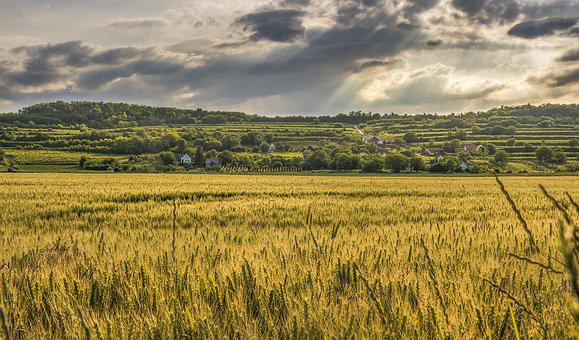 Agriculture, Cereal, Clouds, Countryside, Crop