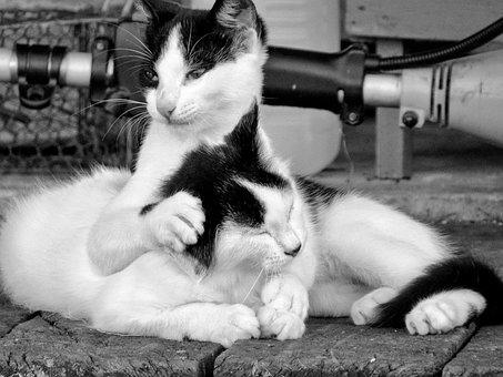 Cat, Mammal, Portrait, Kitten, Pet, Cute, Love, Friends