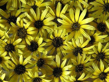 Daisies, Yellow, Plant, Garden
