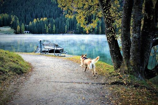 Morning, Spacer, Dog, Lake, The Path, Autumn, Davos