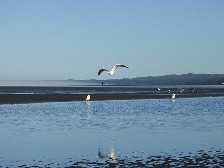 Beach, Seagull, Flight, Gull, Shore, Coast, Blue