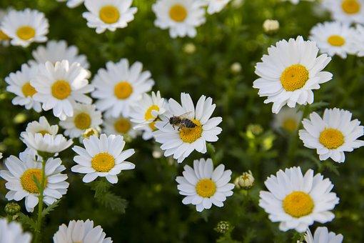 Flower, Spring, Field, Floral, Nature, Spring Flowers