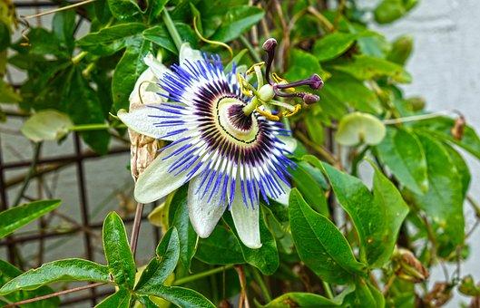 Plant, Flower, Petal, Garden Summer