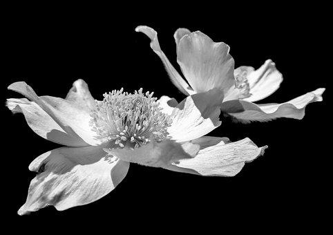 Flower, Flowers, Plant, Plants, Nature, Petals