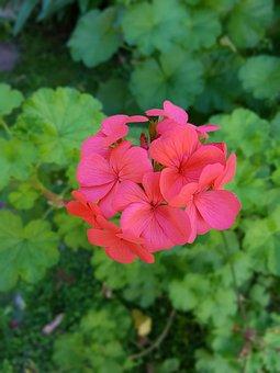 Flower, Macro, Pink Flower, Flowers, Pistillos