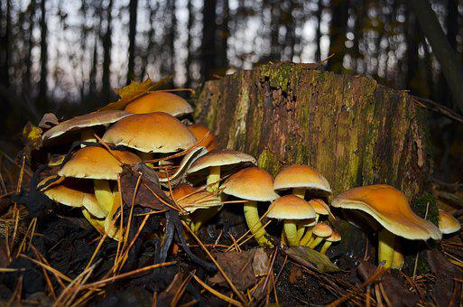 Mushrooms, Forest, In The Forest, Stump, Autumn, Nature