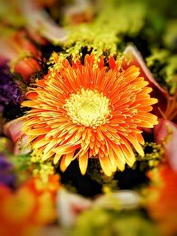 Chrysanthemum, Gerbera, Flower, Beauty, Natural, Plant