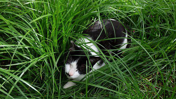 Grass, Kitty, Cat, Black And White, Green