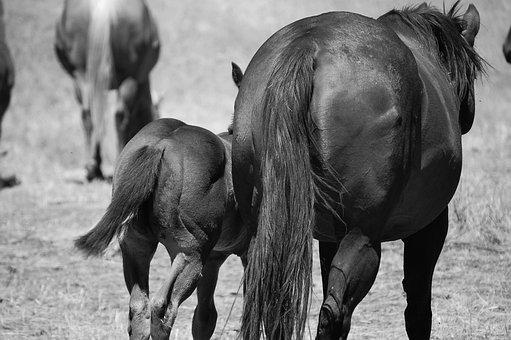 Horses, Horseback Riding, Stallion, Recreation, Farm