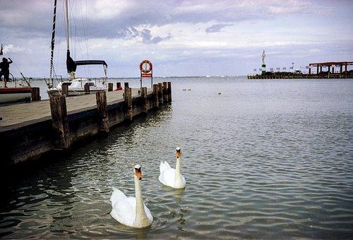 Swan, Lake, Ships, Port, Marine, Water, Nature, Bird