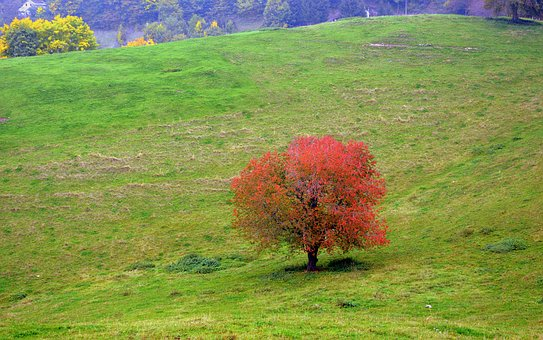 Tree, Leaves, Autumn, Plant, Colorful, Nature, Branches