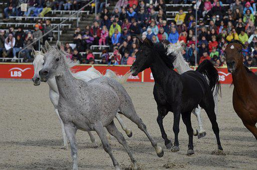 Marbach, Stallion Parade In 2017, Mold, Silver Herd