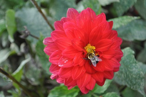 Bee, Flower, Red, Green, Nature, Honey, Garden, Insect