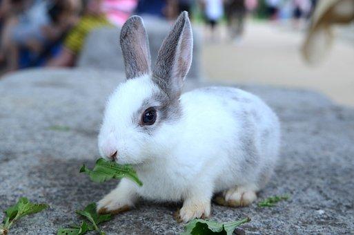 Rabbit, Pool, Grass, Wild, Biology, Nature, Mammals