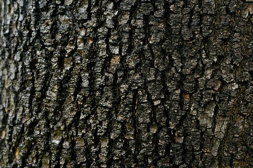 Abstract, Bark, Old Tree, Texture, Pattern, Weathered