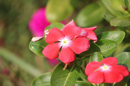 Flower, Pink, Pink Flowers, Plant, Nature, Floral