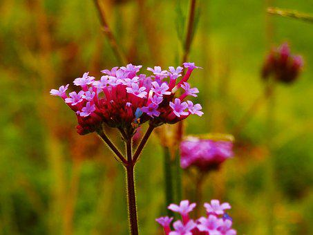 Flower, Purple, Small, Background, Nature