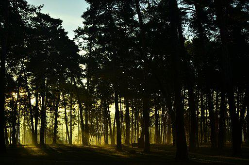 Forest, Sunrise, Nature, Landscape, Rays, Trees, Dawn