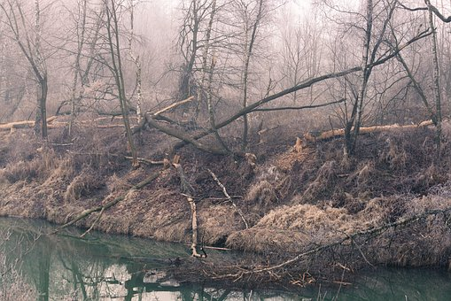 River, Forest, The Fog, Nature, Tree, Broken Trees