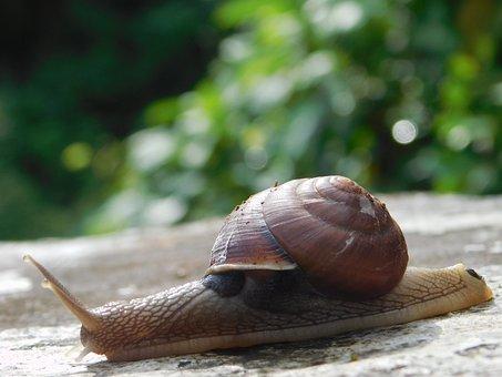 Snail, Stone, Plants