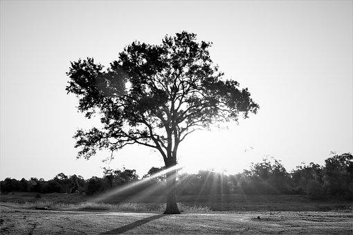Tree, Sun Light, Landscape, Nostalgic, Sunlight, Sunny