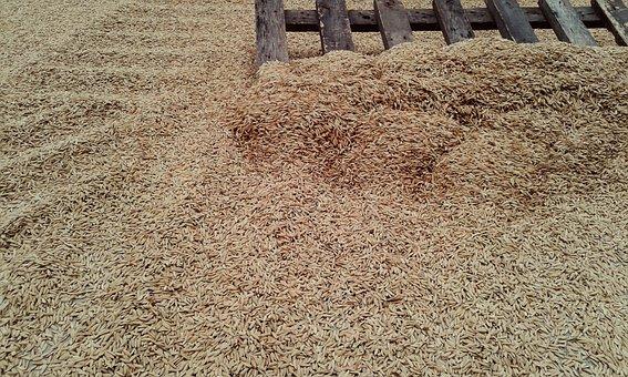 Rice, Grain, Abundance, Agriculture, Desktop, Texture