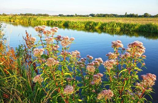 Plant, Vegetation, River Bank Vegetation, Blooms