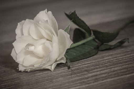 Rose, Romantic, White, Flower, Wedding, Wood