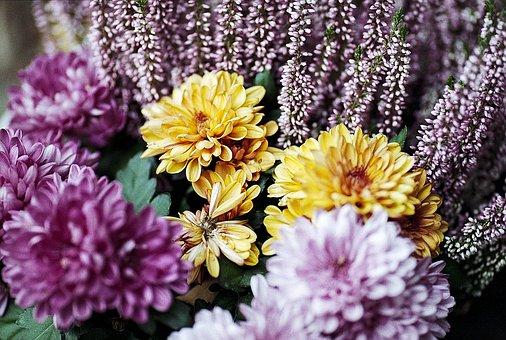 Flower, Spring, Yellow, Pink, Purple, Spring Flowers