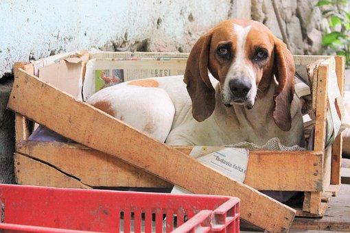 Dog, Box, Dog Look, Portrait, Good