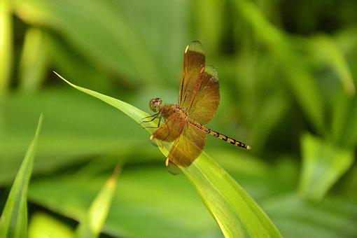 Insects, Fly, Dragonfly, Nature, Wildlife, Bug, Wings