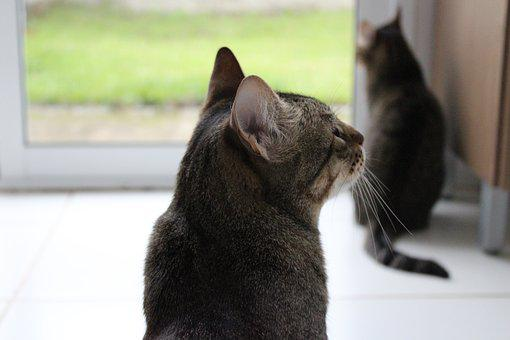 Cats, Back, Ass, Ears, Whiskers, Grass, Look