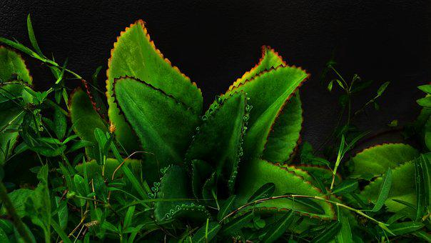 Green, Grass, Flower, Plant, Darkness, Colors