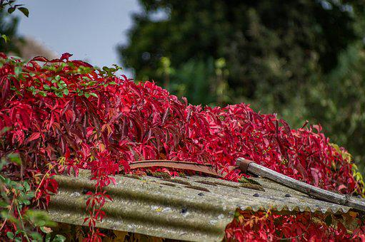 Garden, Autumn, Red Leaves, Late Summer, Flowers