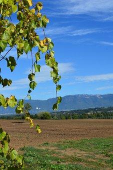 Italy, Grape Vine, Wine, Agriculture, Nature, Vine